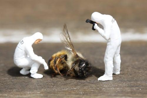 little-people-bee-1099355-unsplash