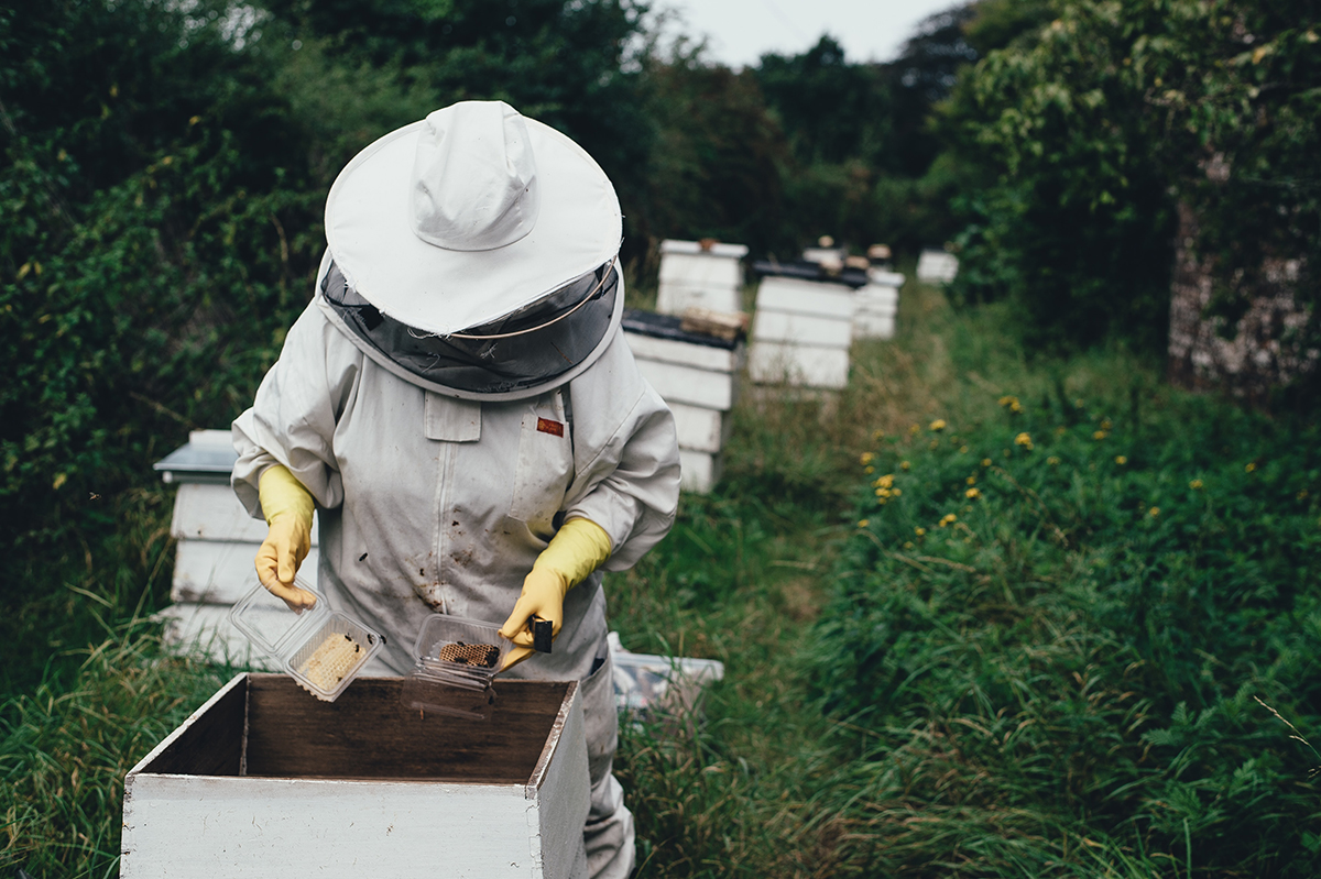 Environmental Testing Bee Colonies for Future Mars Missions
